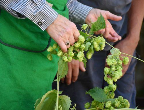 Digitale Plattform zur vertikalen Vernetzung von Beschaffungsprozessen in der Brauereiwirtschaft